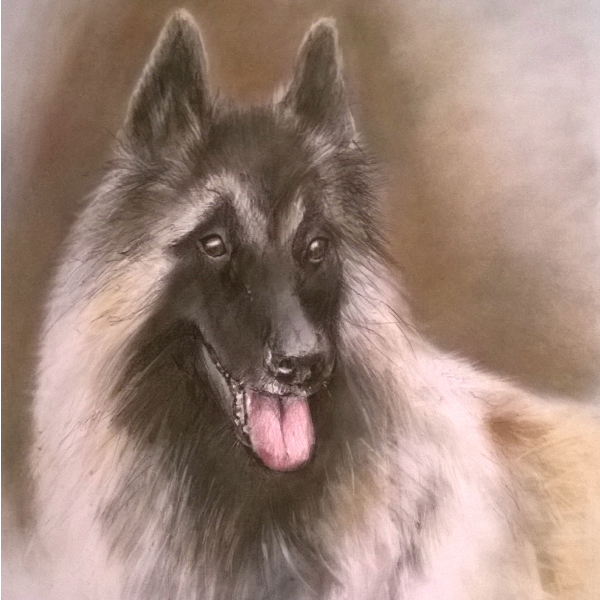 dog pet portrait pencil drawing