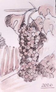 grapes bonarda watercolor with Bonarda red wine