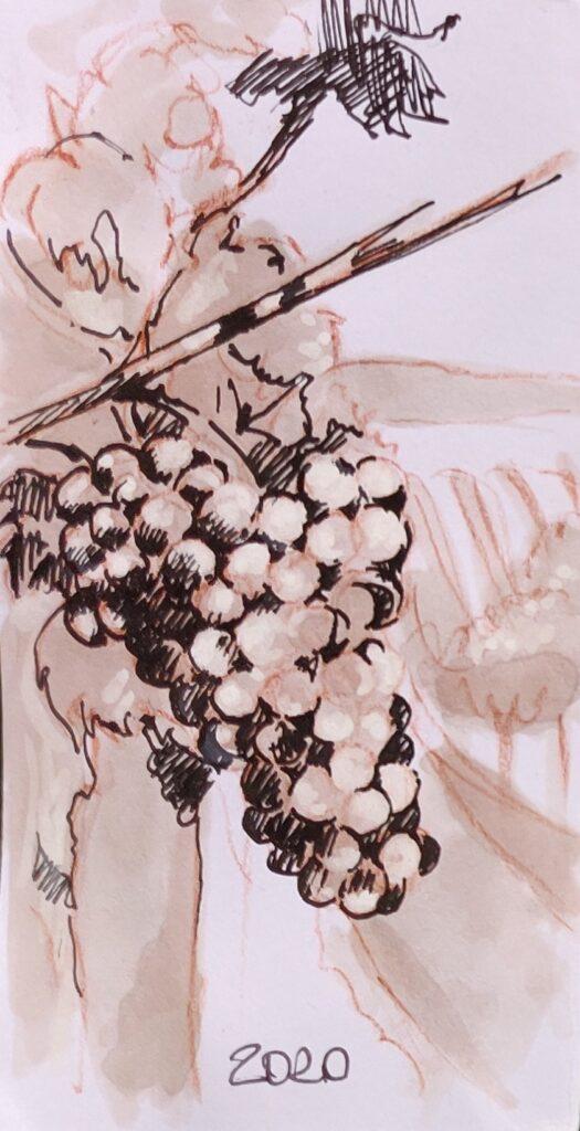 grappolo di sangiovese dipinto con Brunello di Montalcino